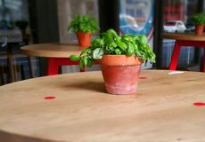 Spinat auf dem Tisch Lizenzfreie Stockbilder