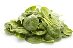 Spinat auf dem weißen Hintergrund Stockbild