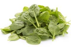 Spinat auf dem weißen Hintergrund Stockbilder