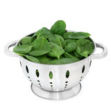 Spinat-Blätter Lizenzfreies Stockfoto