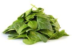 Spinat-Blätter Lizenzfreies Stockbild
