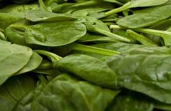 Spinat-Hintergrund Lizenzfreie Stockbilder