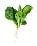 Spinat mit Wurzel Stockfoto