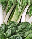 Spinat und Mangoldgemüse Lizenzfreies Stockfoto