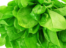 Spinatdetail der Blätter Lizenzfreie Stockfotos