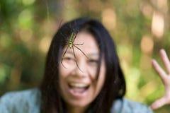 Spindelöverraskning fotografering för bildbyråer