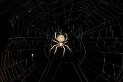 spindel Royaltyfri Bild
