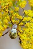 spindel Royaltyfria Foton