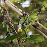 Spindel Arkivbild