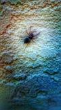 Spindel Royaltyfri Fotografi