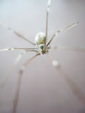 spindel royaltyfria bilder