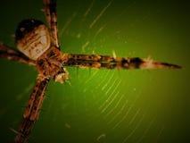 spindel Royaltyfri Foto