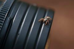 Spindel Fotografering för Bildbyråer