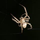 Spindel close fotografering för bildbyråer