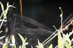 Spindel för blixtlås för trädgård för guling för spindelrengöringsduk Royaltyfri Bild