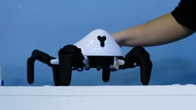 Spindel för kvinnaslaglängdrobot stock video