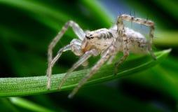 spindel i dess naturliga miljö Royaltyfri Foto