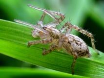 spindel i dess naturliga miljö Royaltyfria Foton