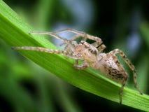 spindel i dess naturliga miljö Arkivfoto