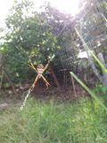 Spindel i ditt nätverk royaltyfri foto