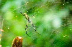 Spindel i en djungel Royaltyfri Fotografi