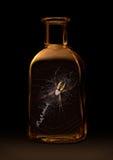 Spindel i en flaska Royaltyfri Bild