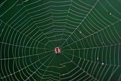 Spindel i en rengöringsduk royaltyfria foton