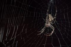 Spindel i en svart bakgrund Arkivfoto