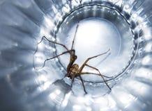 Spindel i ett exponeringsglas royaltyfri fotografi
