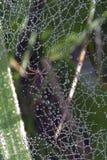 Spindel i gräset Arkivbilder