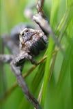 Spindel i gräset Arkivfoton