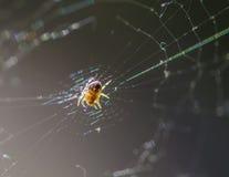 Spindel i mitten av dess rengöringsduk Royaltyfria Bilder