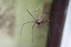 Spindel i mitten av rengöringsduken Royaltyfri Fotografi