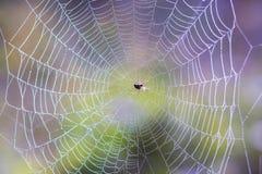 Spindel i mitten av spindelrengöringsduken på en kulör oskarp backg royaltyfri fotografi