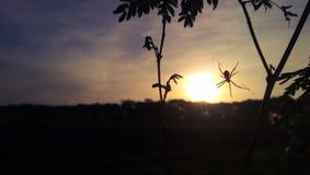 spindel i morgonen fotografering för bildbyråer