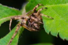 Spindel i natur royaltyfria foton