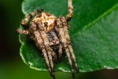 Spindel i natur royaltyfria bilder
