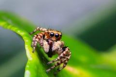Spindel i natur royaltyfri fotografi