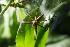Spindel i natur marco Arkivfoto