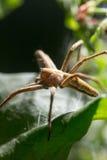 Spindel i natur marco Royaltyfri Foto