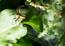Spindel i natur marco Royaltyfri Bild