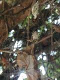 Spindel i rengöringsduk Arkivfoto