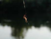 Spindel i rengöringsduk Arkivbilder