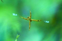 Spindel i rengöringsduk Royaltyfri Fotografi