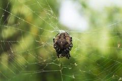 Spindel i rengöringsduken arkivbild