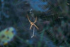 Spindel i sydliga Spanien royaltyfri foto