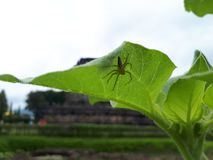 Spindel i tempel royaltyfri foto