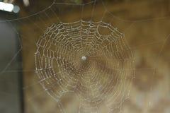 Spindel med rengöringsduken Royaltyfria Foton