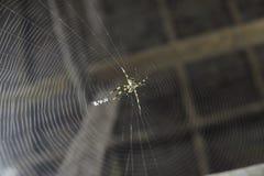 Spindel med rengöringsduken Royaltyfri Foto