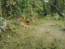Spindel med rengöringsduken på skogen, naturtapet arkivfoton